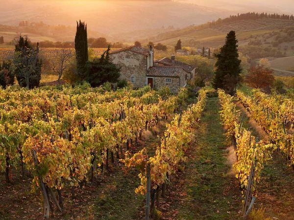 Tuscany-Vineyards