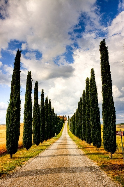 cypress-lined-road-tuscany