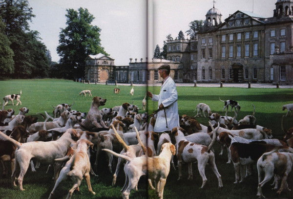 Behind Badminton House huntsman Brian Gupwell stands among the hounds bred for their special pale coats. Photo by Horst.