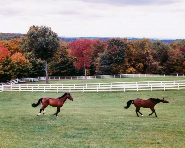 Horses running at Willow Grace Farm, designed by architect Gil Schafer. Photo by